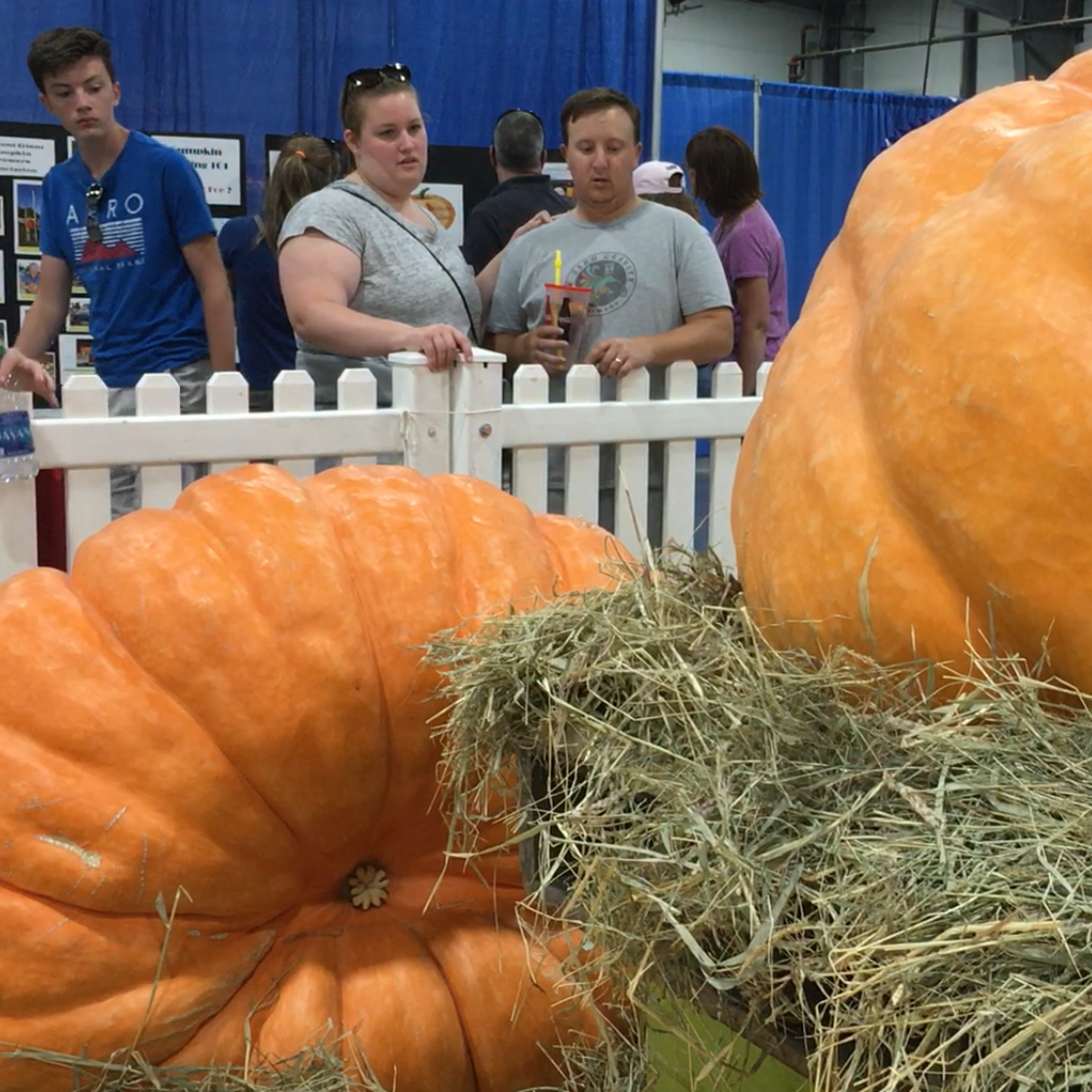 Giant pumpkins: Vermont growers on continual quest for record sizes