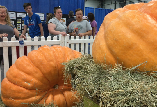 Prize-winning giant pumpkins draw attention at the Champlain Valley Fair in Essex Junction on Sept. 1, 2018.