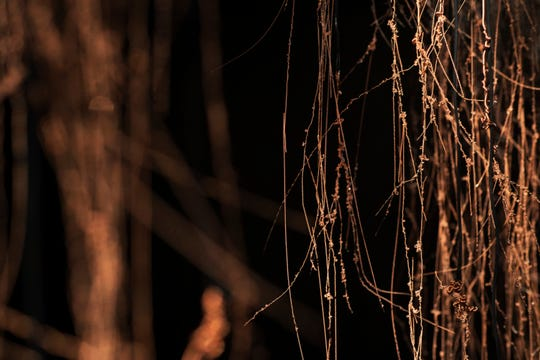 Part of Catie Newell's 24-foot-wide copper-wire sculpture at Birmingham Bloomfield Art Center through Nov. 15.