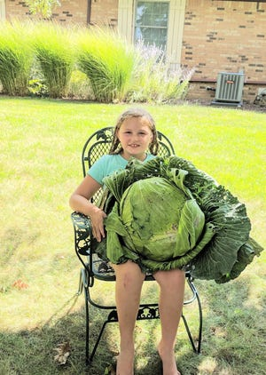 Kenzie Schwochow  holds one of the cabbages from this year's harvest.