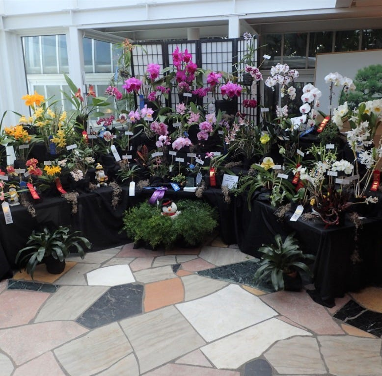 Orchid show promises to be a scream