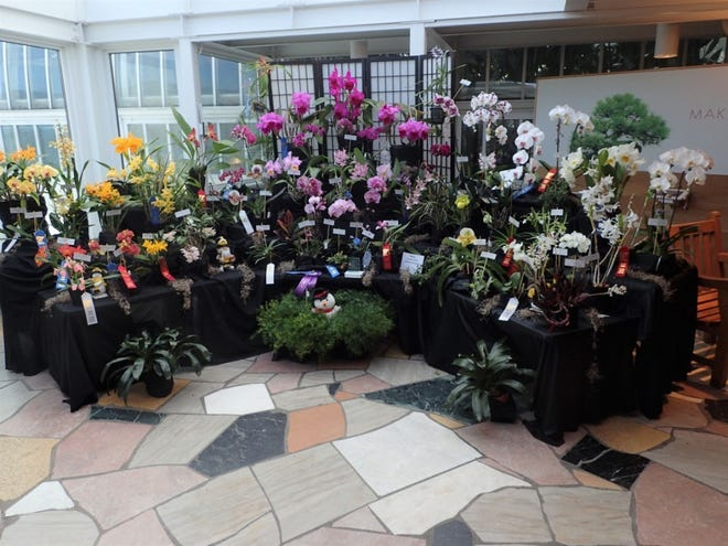 Orchids of all types will be on display at the Eastern Iowa Orchid Society's annual show and sale.