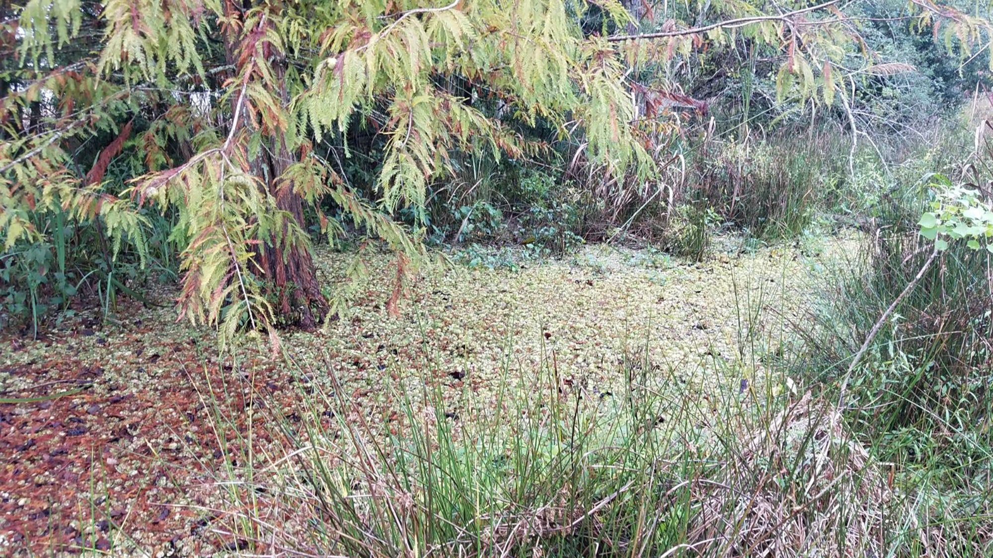 Barnett Reservoir board takes serious action to combat invasive giant salvinia