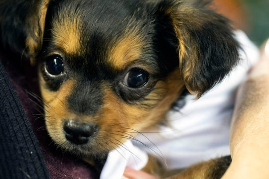 "Iowa is home to a national ""puppy laundering"" ring that masquerades puppy-mill purebreds as rescues, selling them for thousands of dollars each in cities and states where they're banned, an Iowa Attorney General lawsuit alleges. (2018 file photo)"