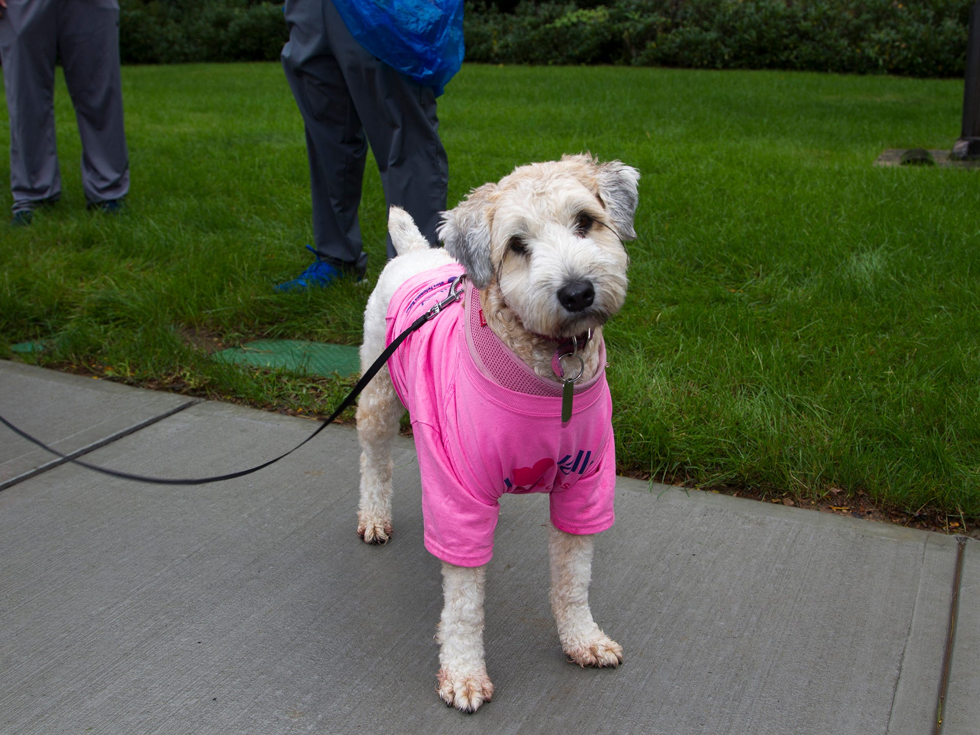 Valley National Bank held its 10th annual Breast Cancer Walk in Wayne. 10/13/2018