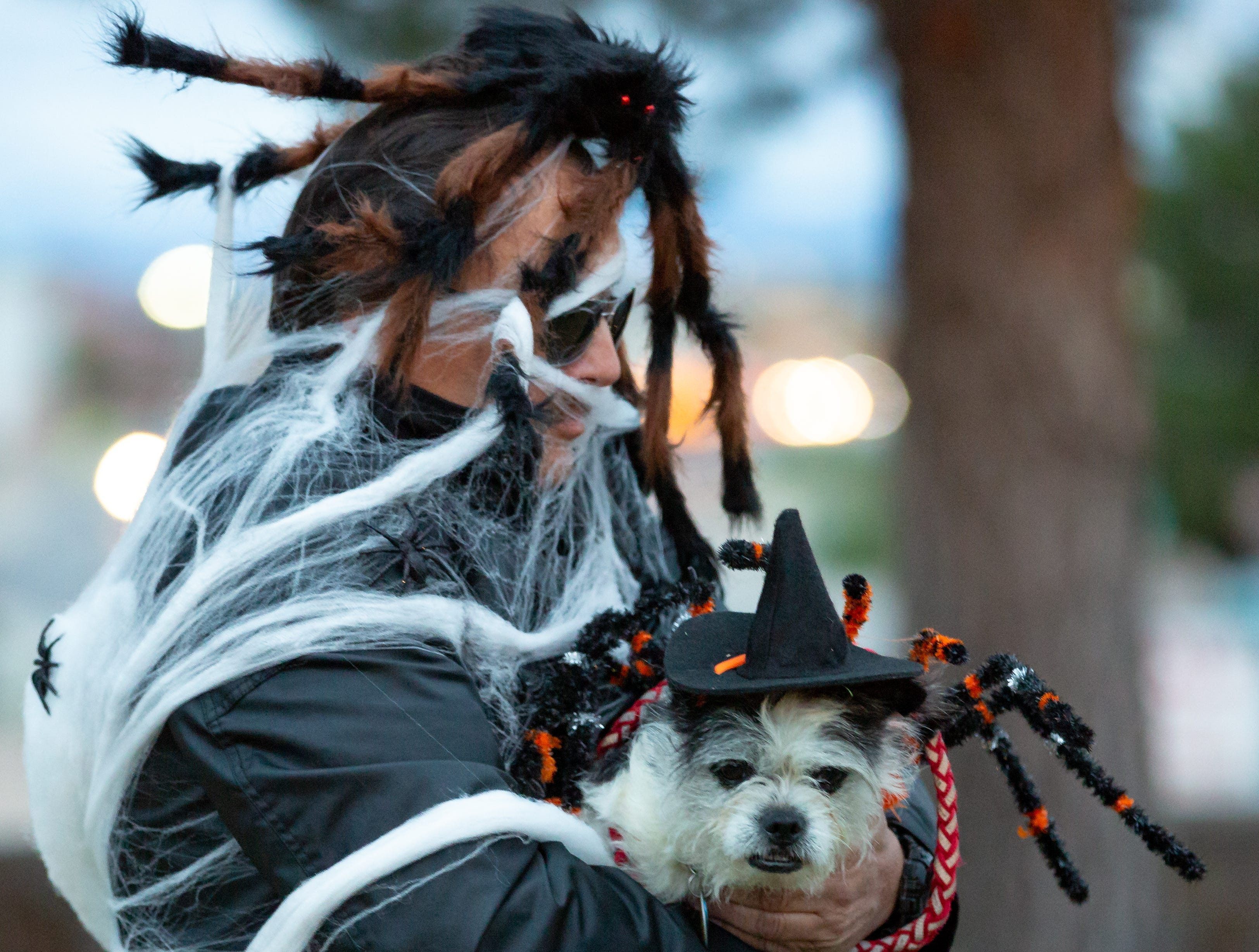 Natasha, 3, and her owner Bill Vanderkamp, dress as a spider family at the start of the Halloween costume contest for pets on Wednesday, Oct. 17, 2018, during the final Yappy Hour of the year at St. Clair Winery and Bistro.