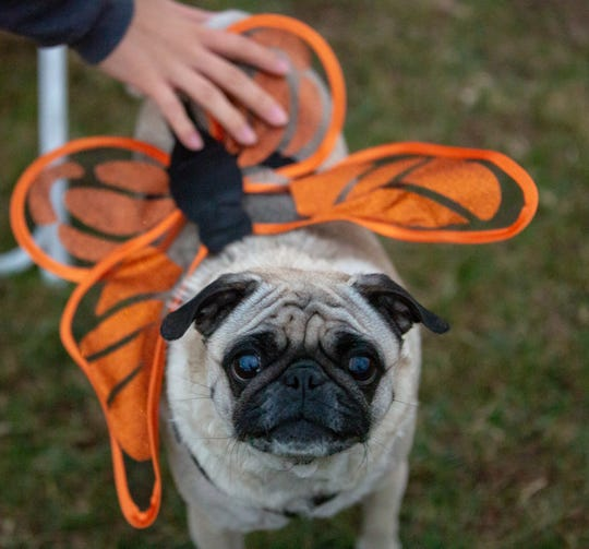 Costumes for pets is a big thing, especially among Millennials.