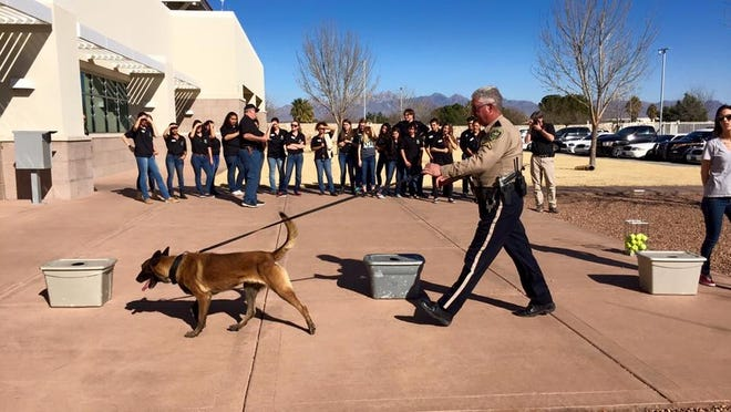 The Doña Ana County Sheriff's Department is hoping to win the popular vote in an online contest that could earn the agency one of eight K9 grants.