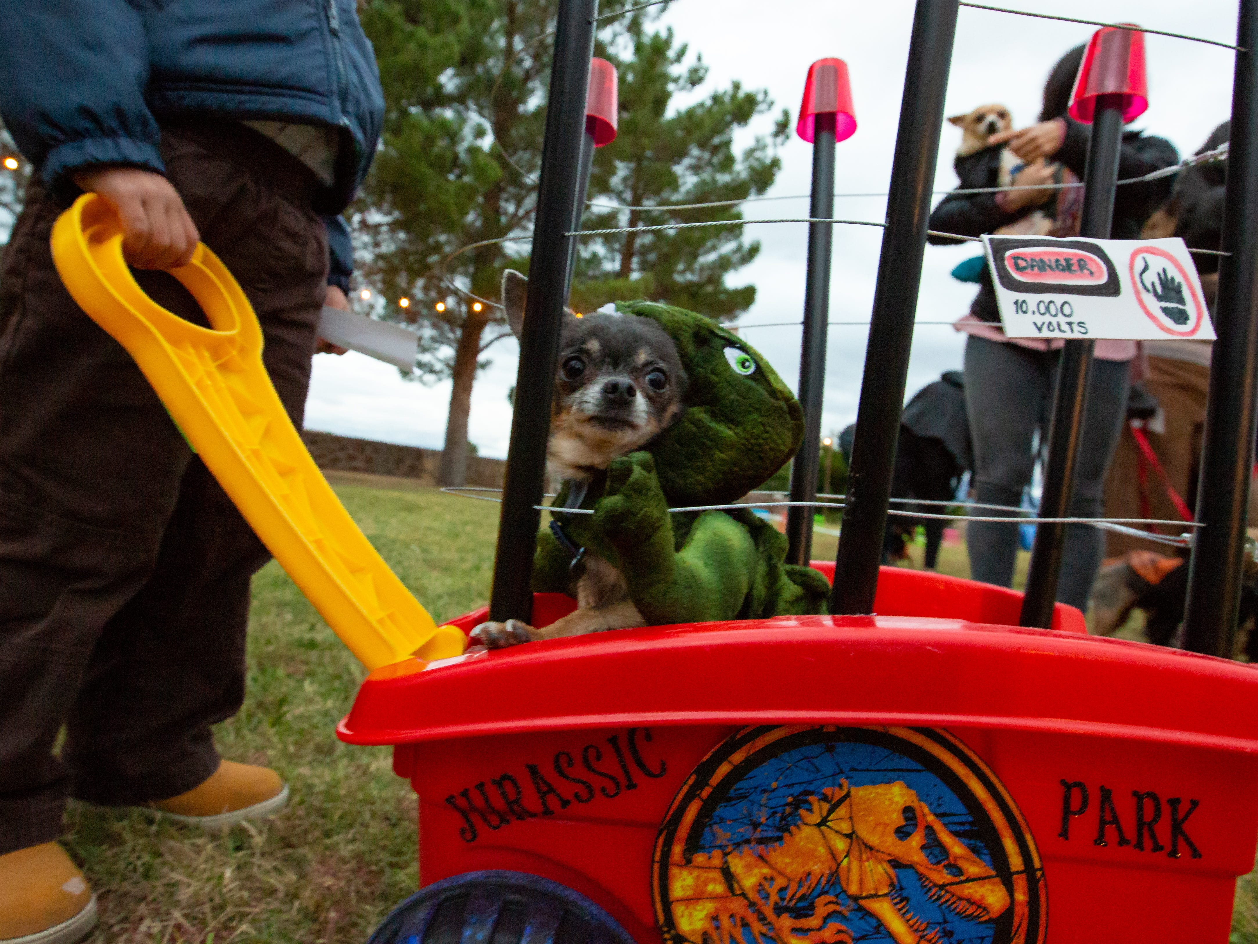 Jurassic Park enthusiast Kotta, 6, and her human friend, Liam Cata, 3, left, wait for the start of the Halloween costume contest for pets on Wednesday, Oct. 17, 2018, during the final Yappy Hour of the year at St. Clair Winery and Bistro.