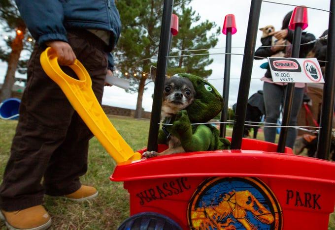 12 totally terrific halloween costumes for dogs from las cruces yappy hour