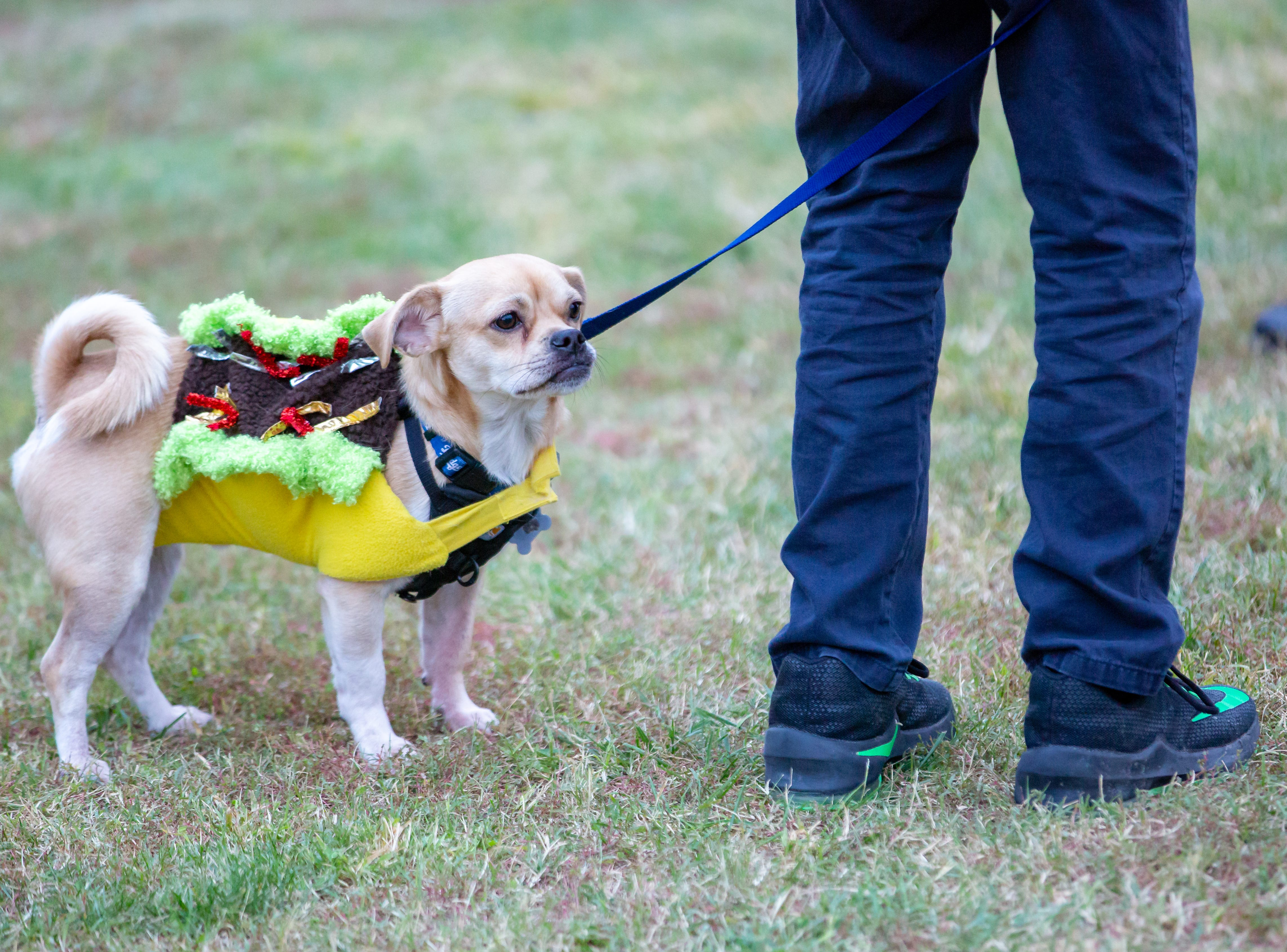 A dog named Menudo, 2, of Las Cruces, is dressed as a taco at the start of the Halloween costume contest for pets on Wednesday, Oct. 17, 2018, during the final Yappy Hour of the year at St. Clair Winery and Bistro.