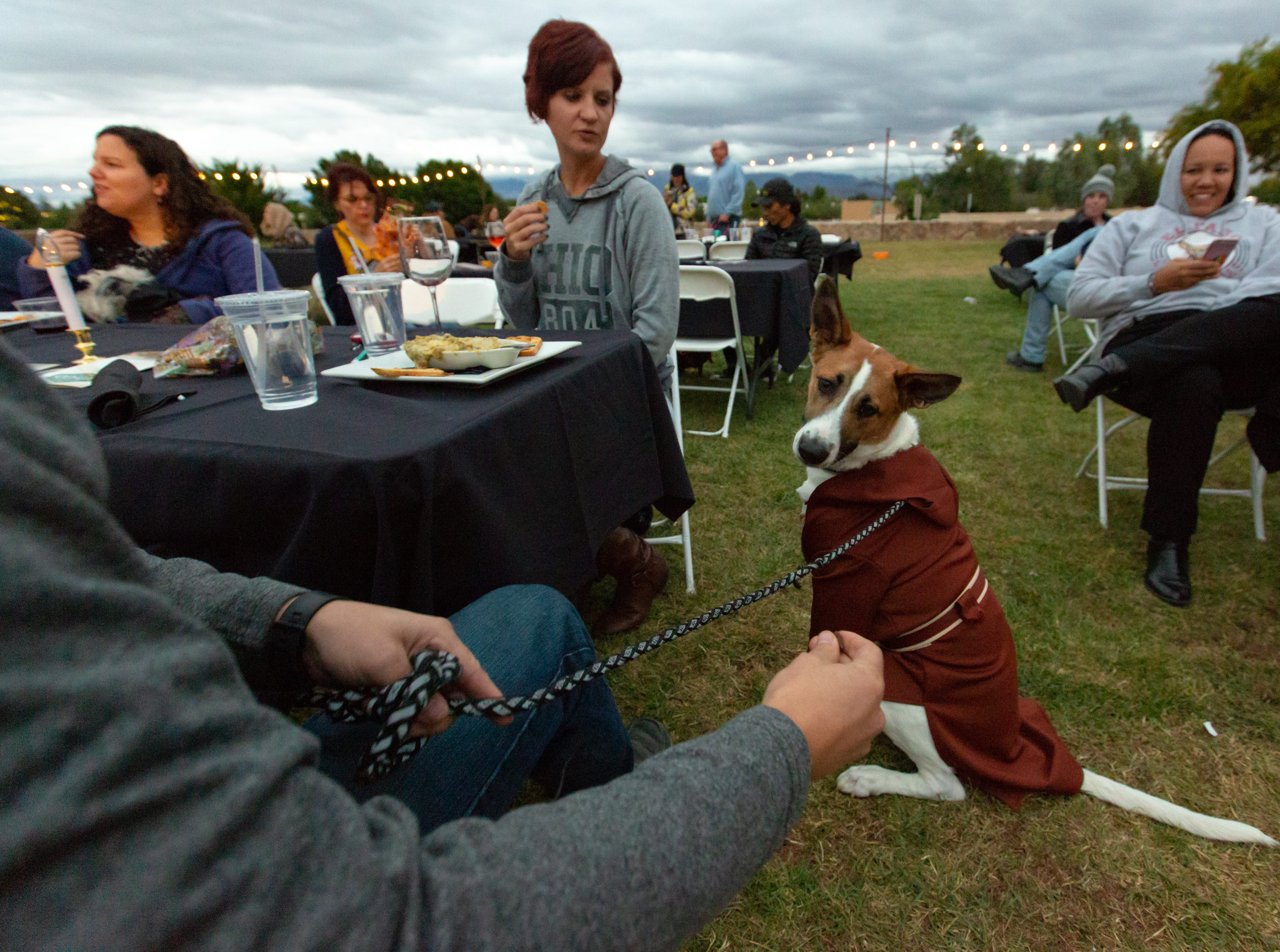 Jedi Master Finn, 10, of Las Cruces, is focused on a treat from his owner, Josh Teeters at the Halloween costume contest for pets on Wednesday, Oct. 17, 2018, during the final Yappy Hour of the year at St. Clair Winery and Bistro.
