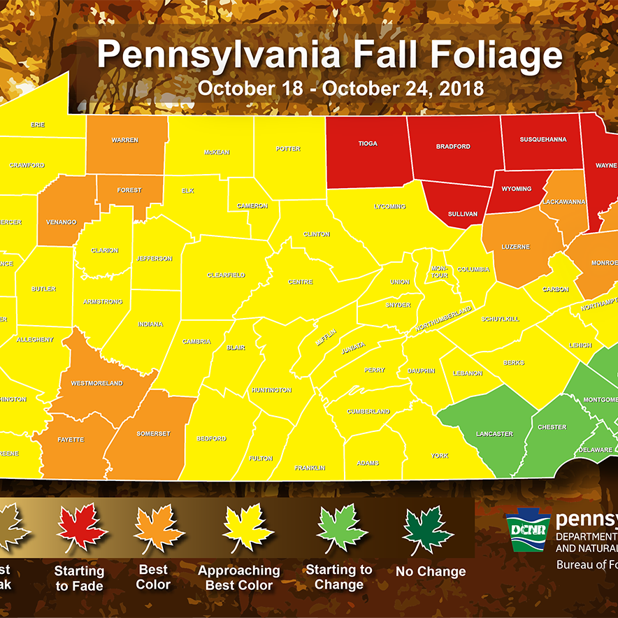 Fall foliage is peaking or close to peak in most of Pa. Here's where colors are this week.