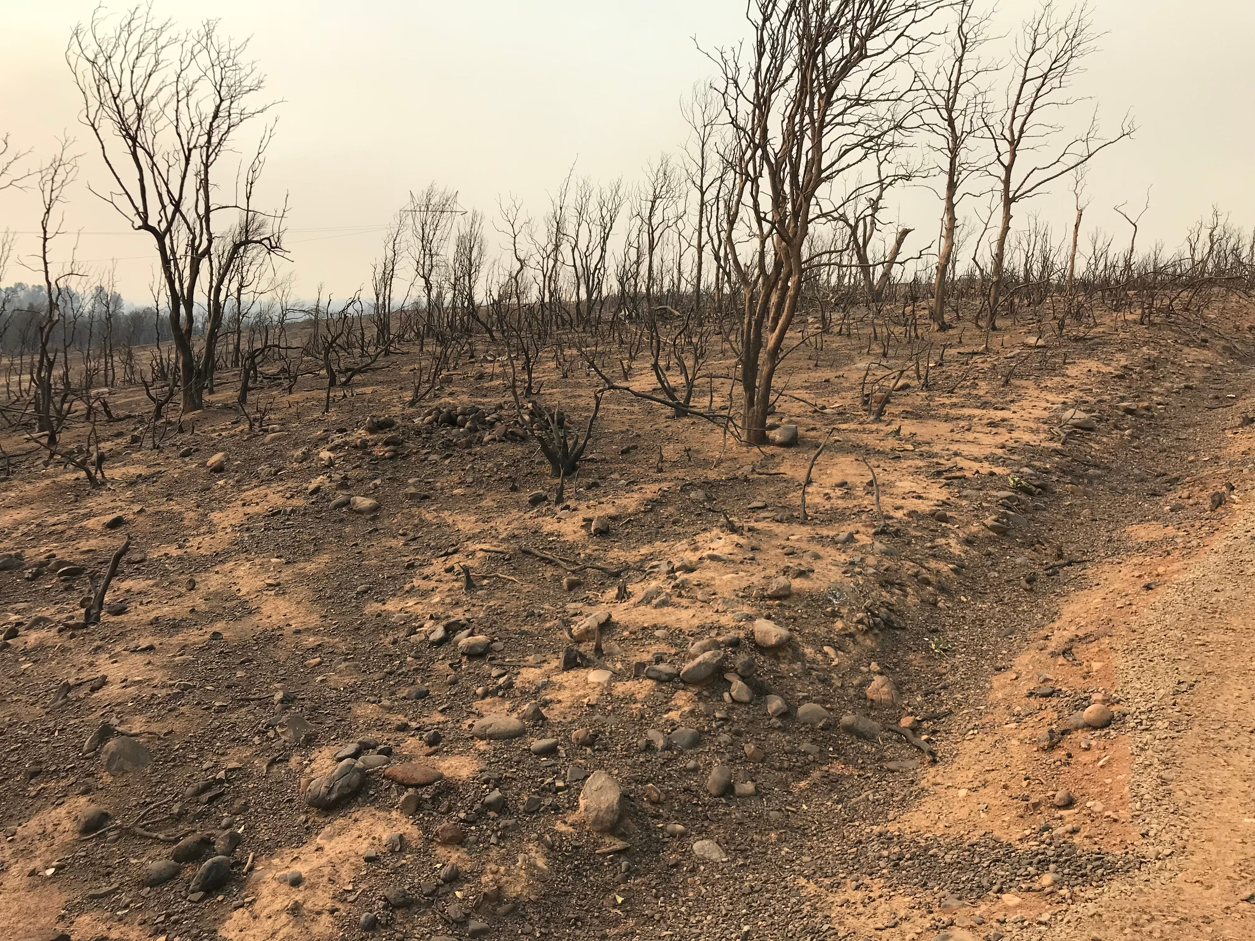 In some places the Carr Fire killed off all plants on hillsides, removing the vegetation that holds soil in place during rains and creating erosion concerns.