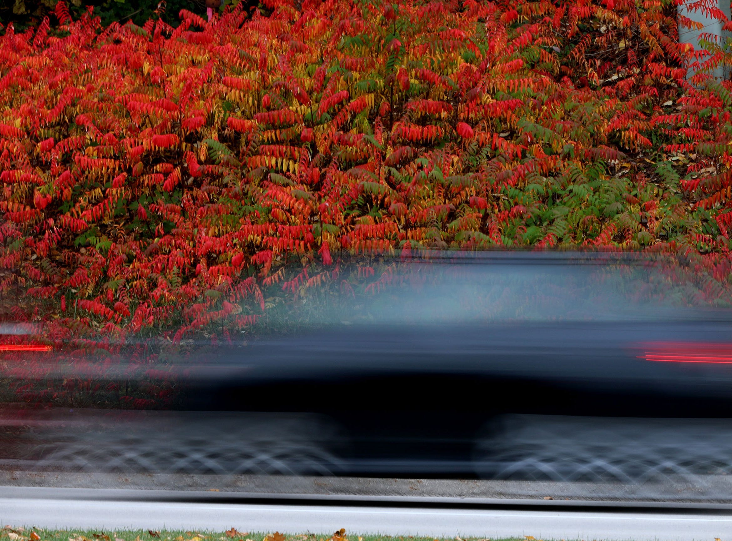 A car is a blur as it drives past colorful sumac trees along Taylor Drive, Friday, October 12, 2018, in Sheboygan, Wis.
