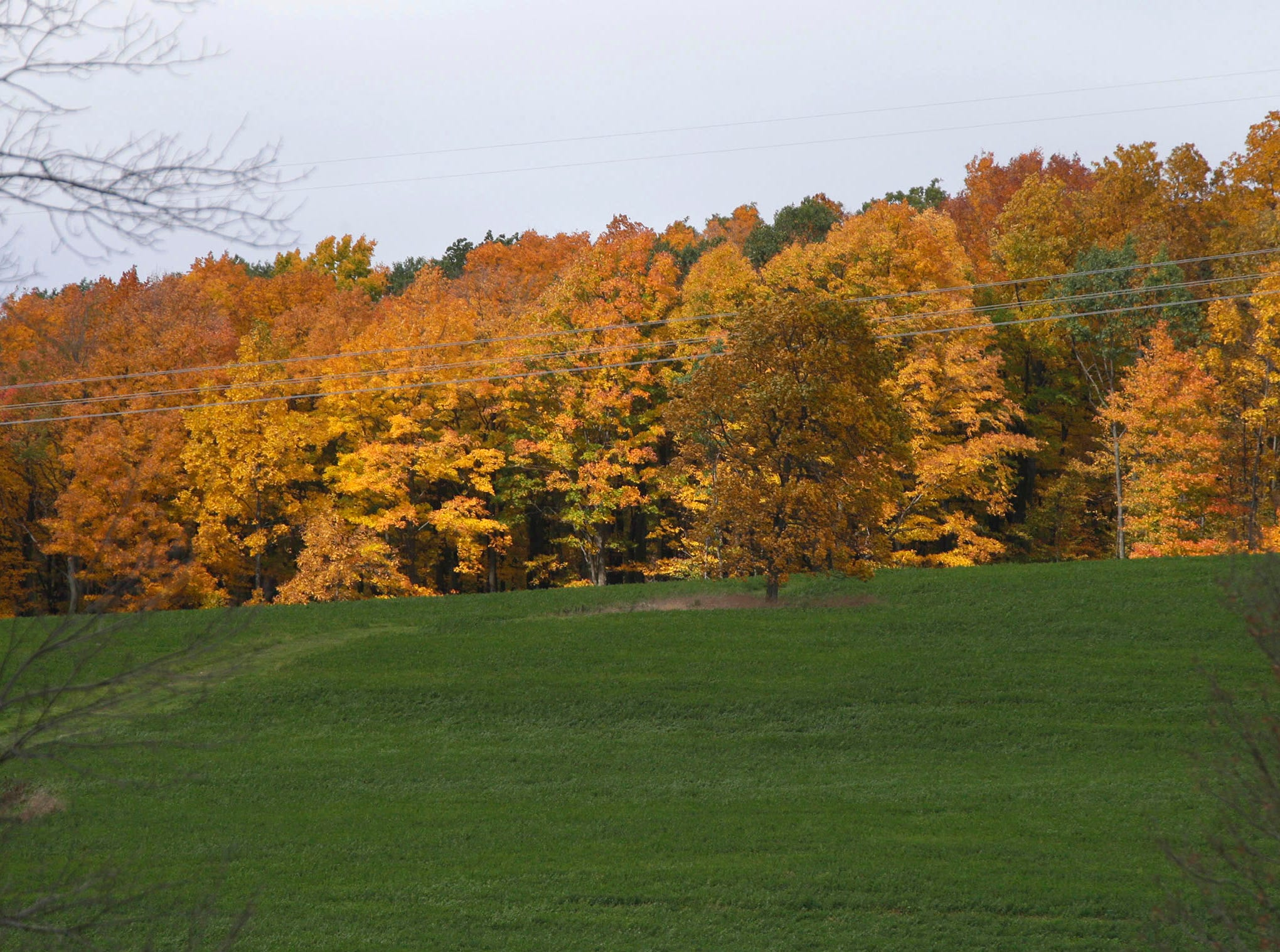 Trees turning their fall colors line up like soldiers along county Road U in the Town of Mitchell, Wis.