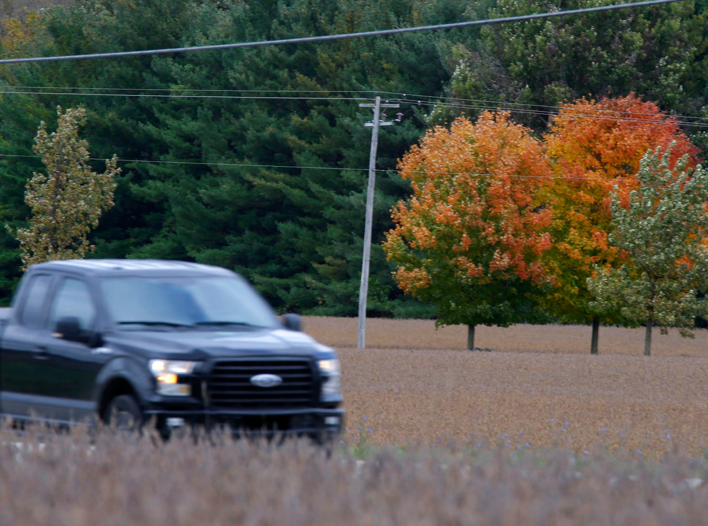 A truck drives by a pair of trees turning their colors near Thursday, October 11, 2018, near Plymouth, Wis.