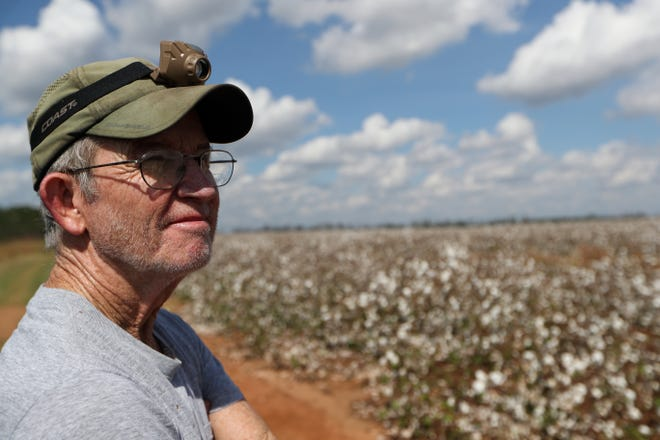 Cleve Bridges looks over the cotton field adjacent to his Donalsonville, Ga. home in the aftermath of Hurricane Michael Wednesday, Oct. 17, 2018.