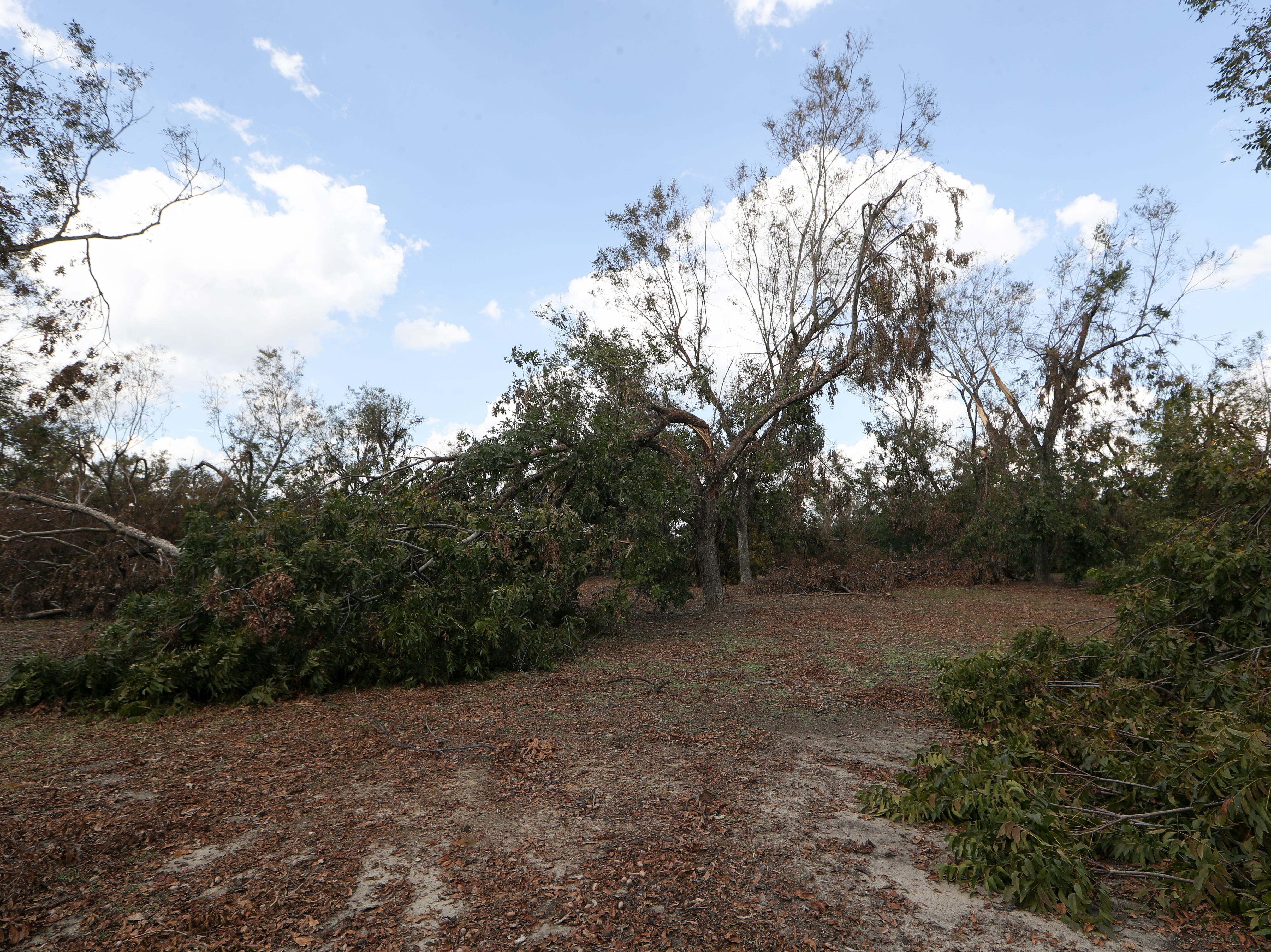 Pecan orchards on Seldom Rest Farm in Donalsonville, Ga. are destroyed in the aftermath of Hurricane Michael Wednesday, Oct. 17, 2018.