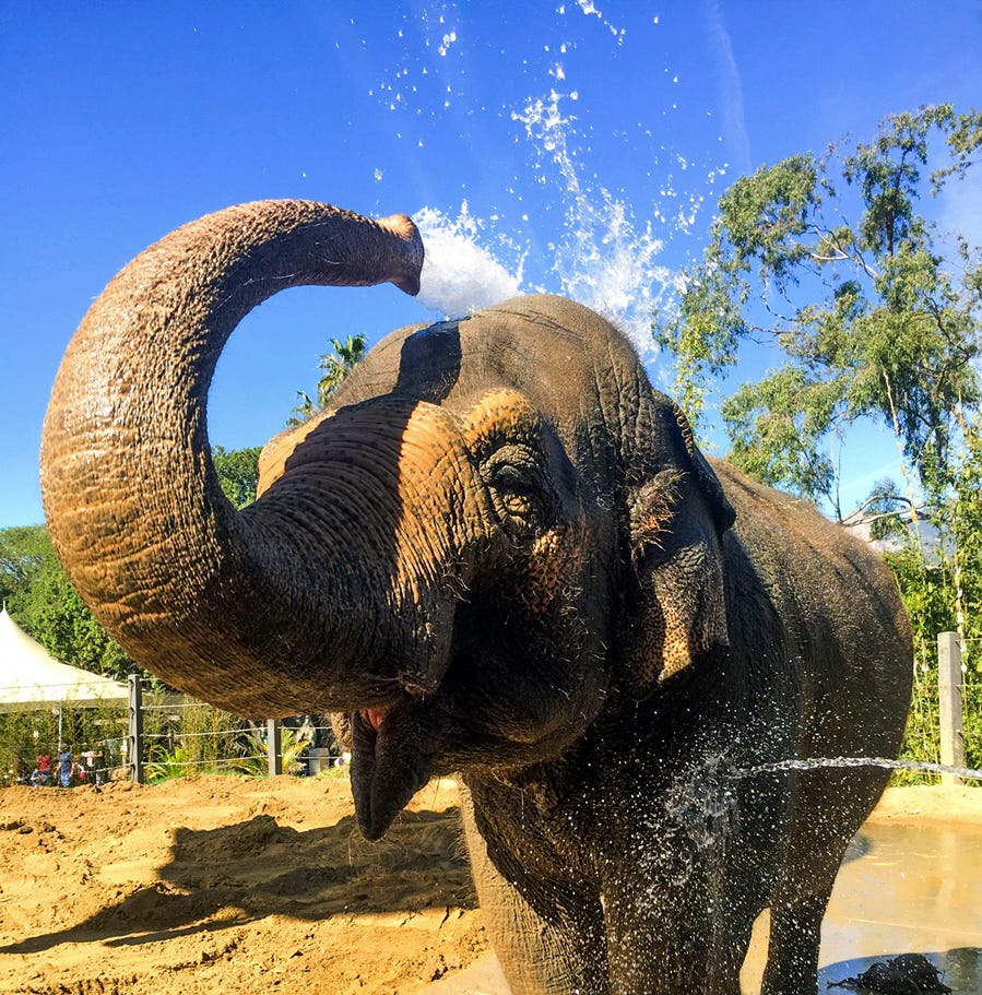 Santa Barbara Zoo euthanizes beloved elephant Sujatha