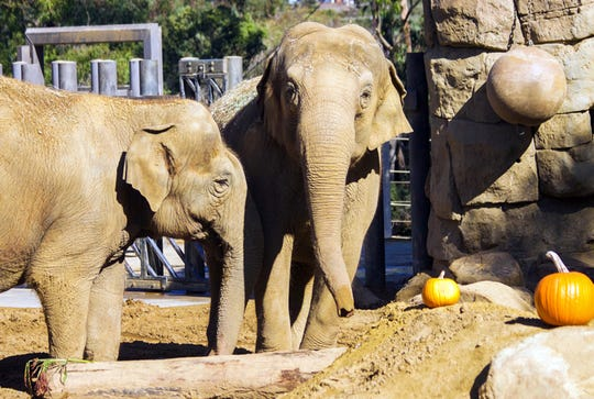 This undated photo provided by the Santa Barbara Zoo shows Asian elephant Sujatha, right, at the Santa Barbara Zoo in Santa Barbara, Calif. The zoo says it had to euthanize Sujatha who is one of its most beloved and oldest residents. Sujatha was euthanized Tuesday surrounded by her caretakers.