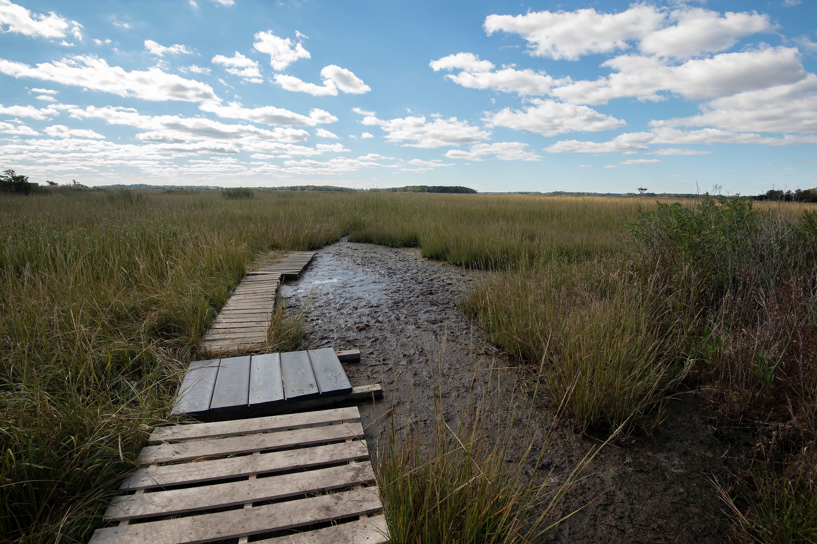 Delaware marsh project lauded as educational tool | Delaware Online