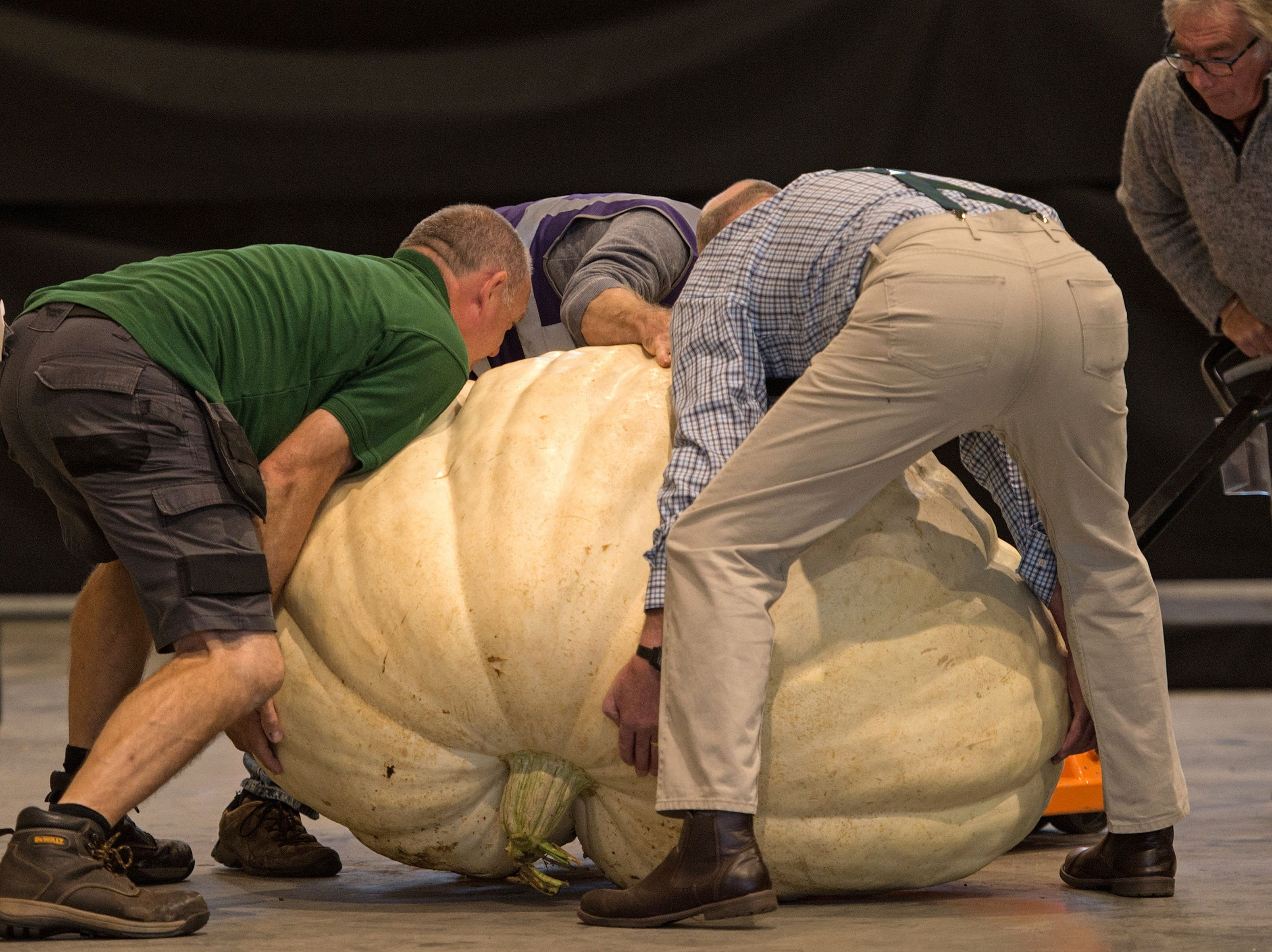 Show staff weigh pumpkins entered into the giant pumpkin competition on the first day of the Harrogate Autumn Flower Show held at the Great Yorkshire Showground, in Harrogate, northern England, on September 14, 2018. (Photo by OLI SCARFF / AFP)OLI SCARFF/AFP/Getty Images ORG XMIT: 5387 ORIG FILE ID: AFP_1935IP