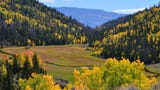 Pando, a colony of 40,000 trees in Utah, is shrinking due to failed preservation efforts. The cluster of trees can't expand due to grazing wildlife.