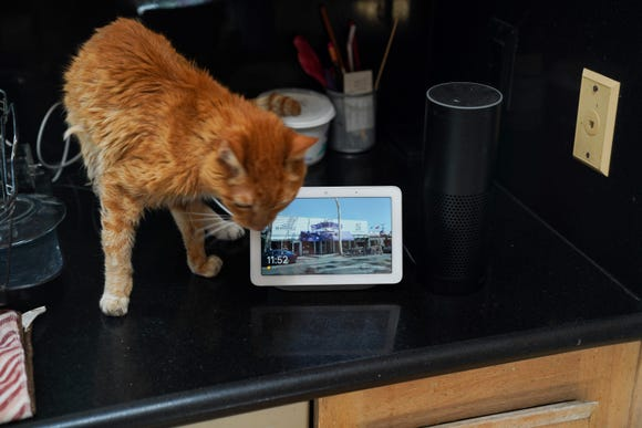 How small is the Google Home Hub? It's so tiny that the Amazon Echo is dwarfing, and Mr. Jinx the cat overthrows it.