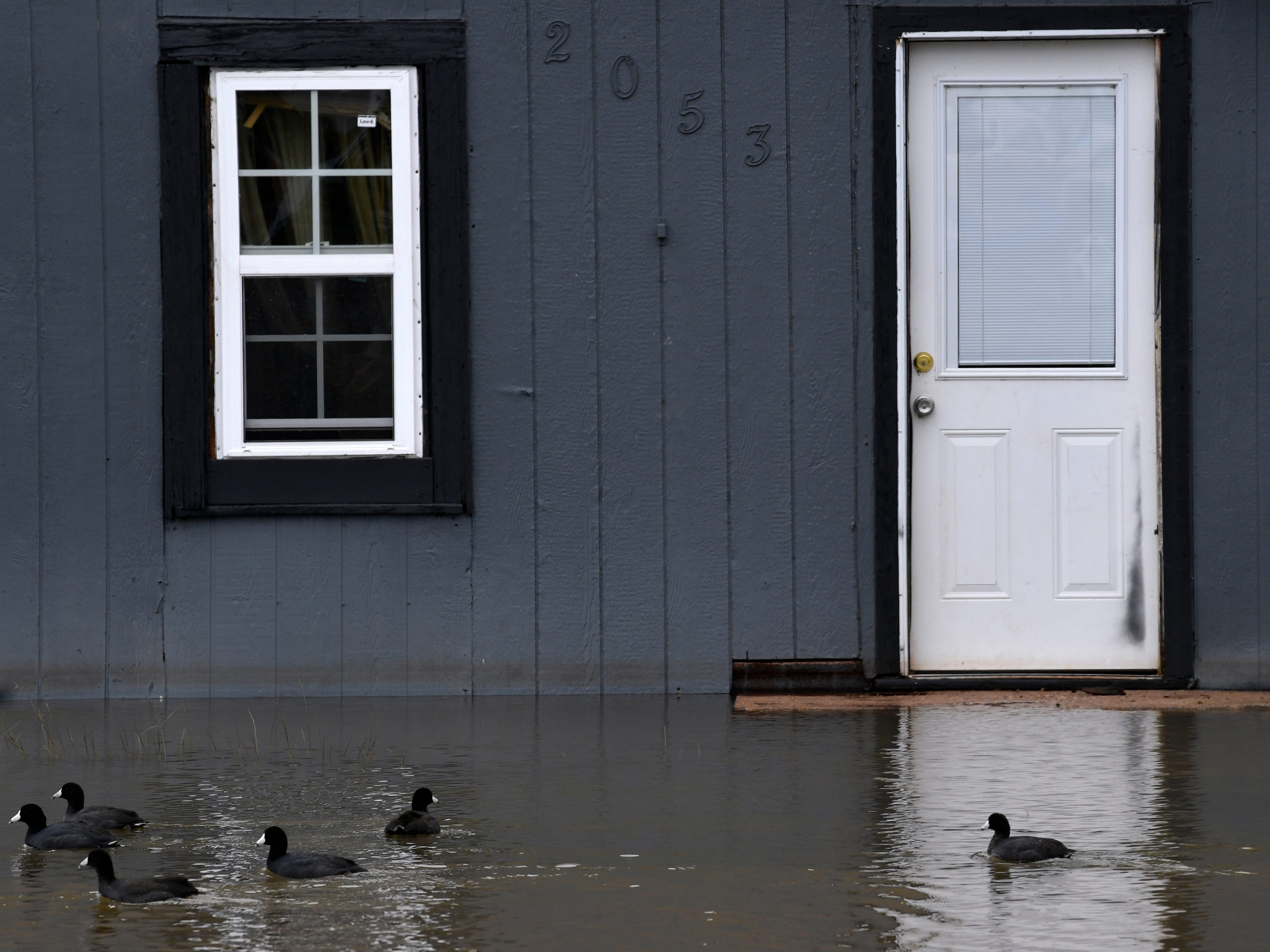 Waterfowl swim past a home's door Thursday Oct. 18, 2018 at Lake Stamford. Heavy rains have filled the lake to overflowing, flooding homes along the shore for the first time in several years.
