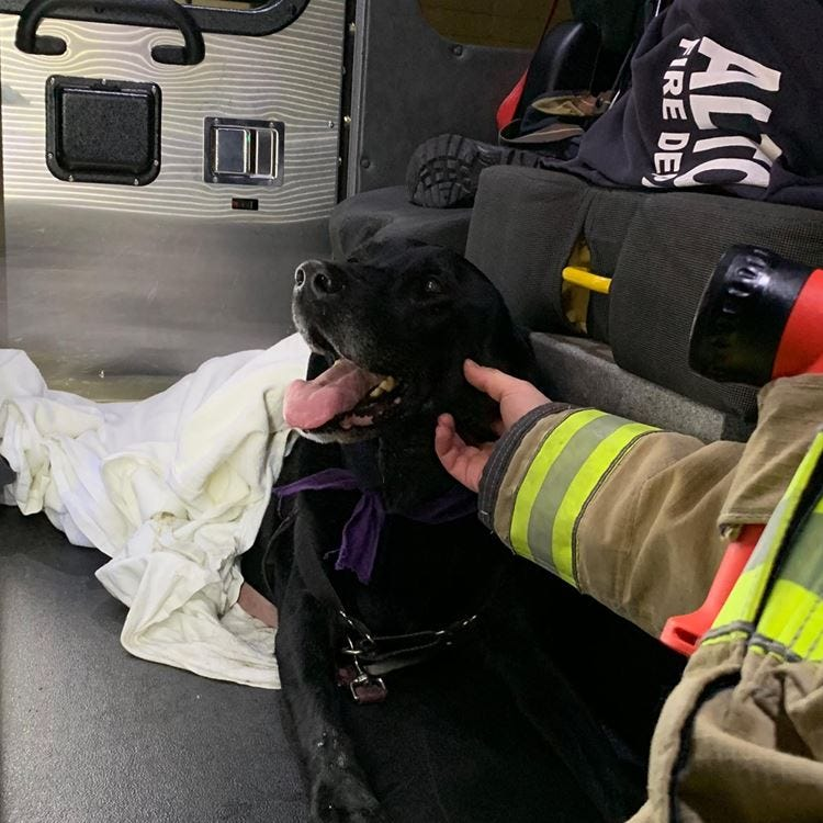 Altoona firefighters went 'above and beyond' to save dog injured in head-on I-80 crash