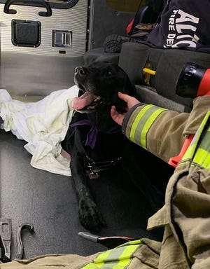 """Altoona firefighters are being recognized for going """"above and beyond"""" to save a dog injured in a head-on crash on Interstate 80 last weekend."""
