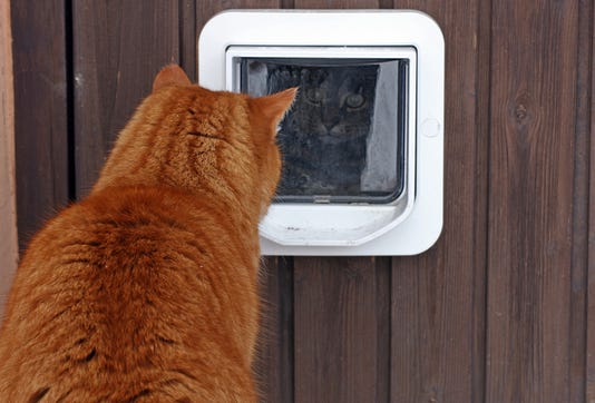 The Cat Flap