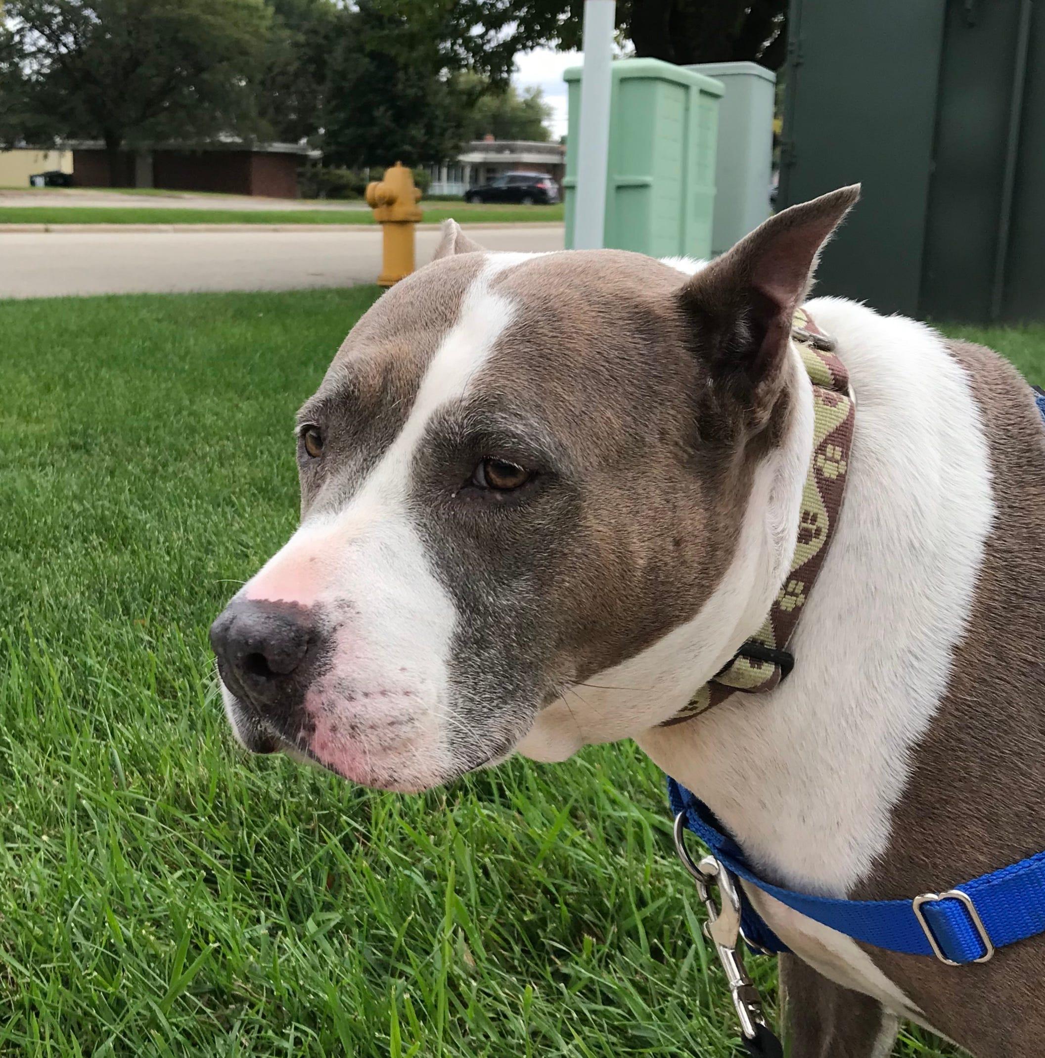 "Oshkosh Northwestern Pet of the Week: This ""Dream"" dog loves attention."