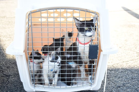 Escambia County Animal Services arranged to transport 205 cats and 20 dogs from Pensacola to Portland, Oregon and Seattle, Washington on Friday, Oct. 19. The animals had been in shelters in Bay and Gulf Counties, two areas hit hard by Hurricane Michael.