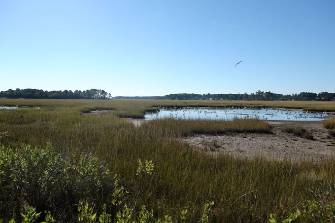 The billions of bacteria living in just one gram of marsh mud are critically important to the healthy functioning of wetlands.