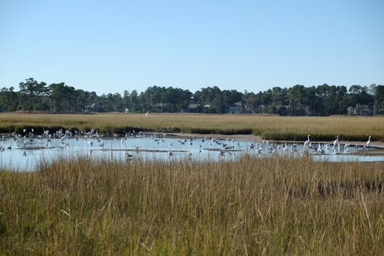 Wetlands are ecologically important to Sussex County.