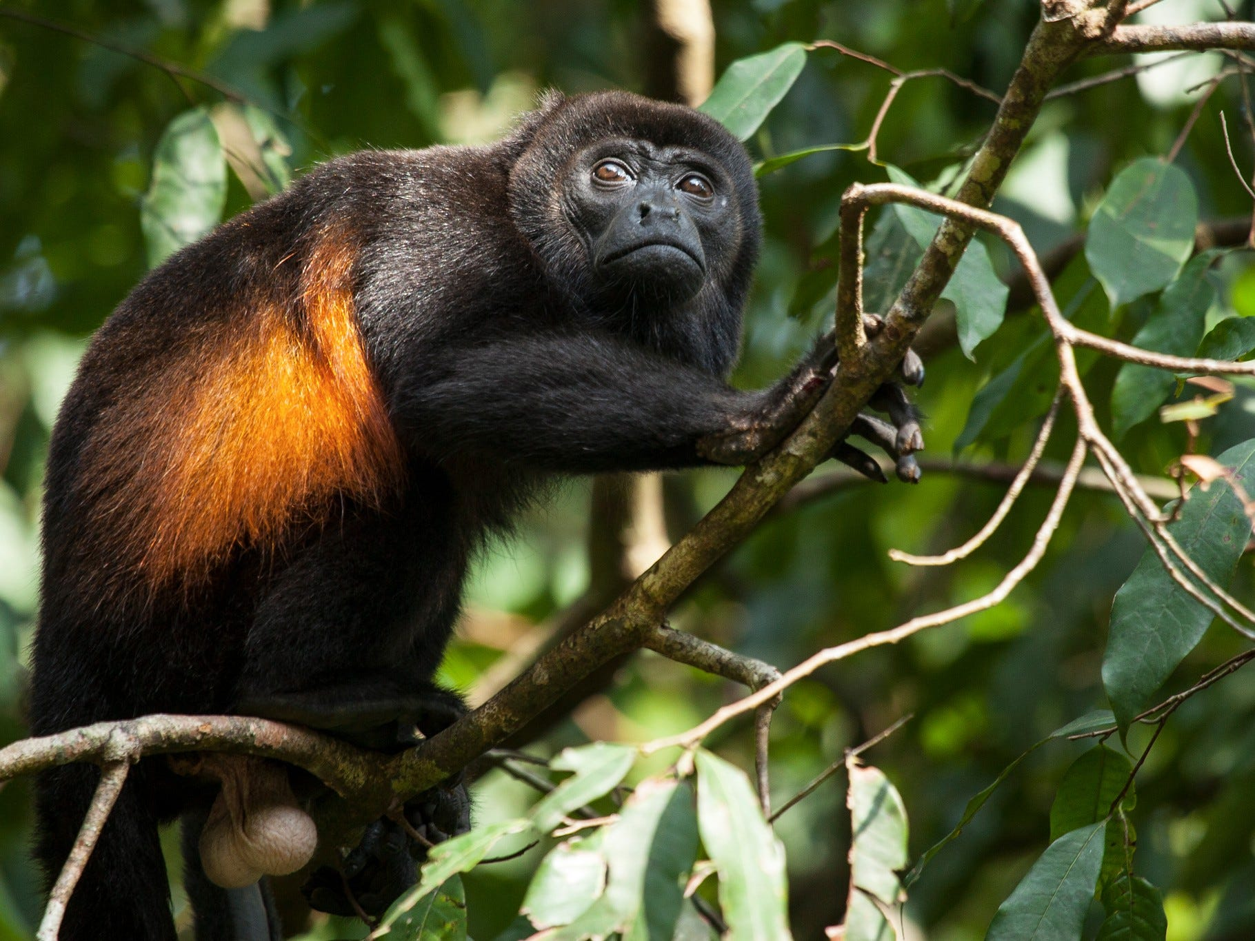 Whichever eco-lodge a traveler chooses in Costa Rica, there will be plenty of opportunities for animal interaction.