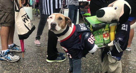 Amy a labrador mix dressed up as two football fans ready for game time at the seventh annual Bark in the Park in Corpus Christi Saturday at Cole Park.