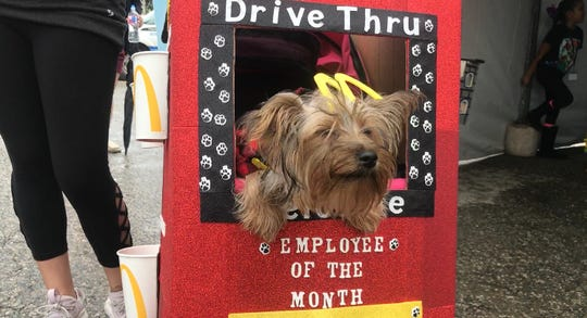 Sky the Yorkshire Terrier dressed up as a McDonald's employee of the month at the seventh annual Bark in the Park in Corpus Christi Saturday, Oct. 20, 2018.