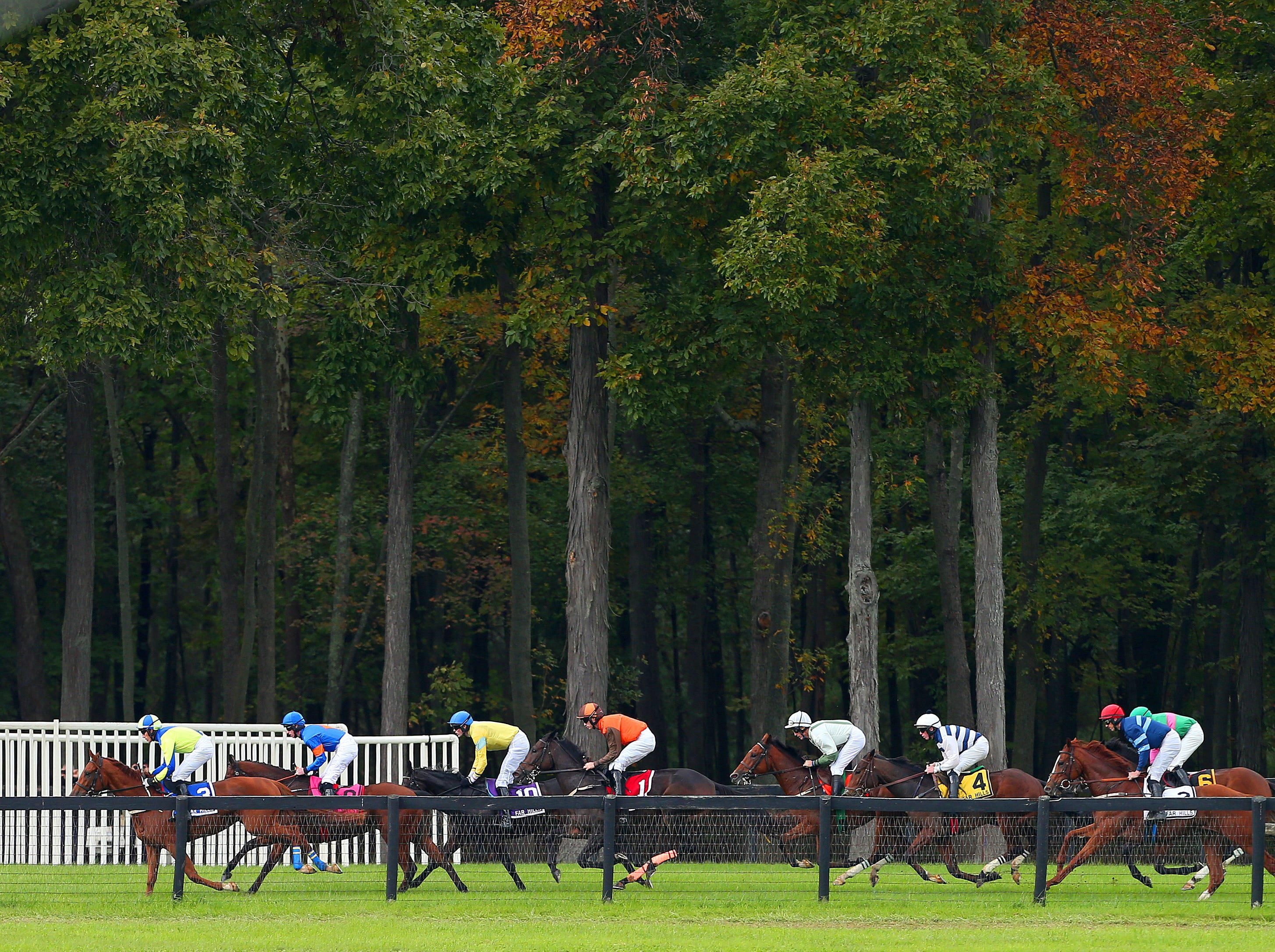 Horses on the back stretch in the Gladstone during the 98th running of the Far Hills Race Meeting at Moorland Farm in Far Hills, N.J. on Saturday, Oct. 20, 2015. Photo by Rich Schultz/ HNT