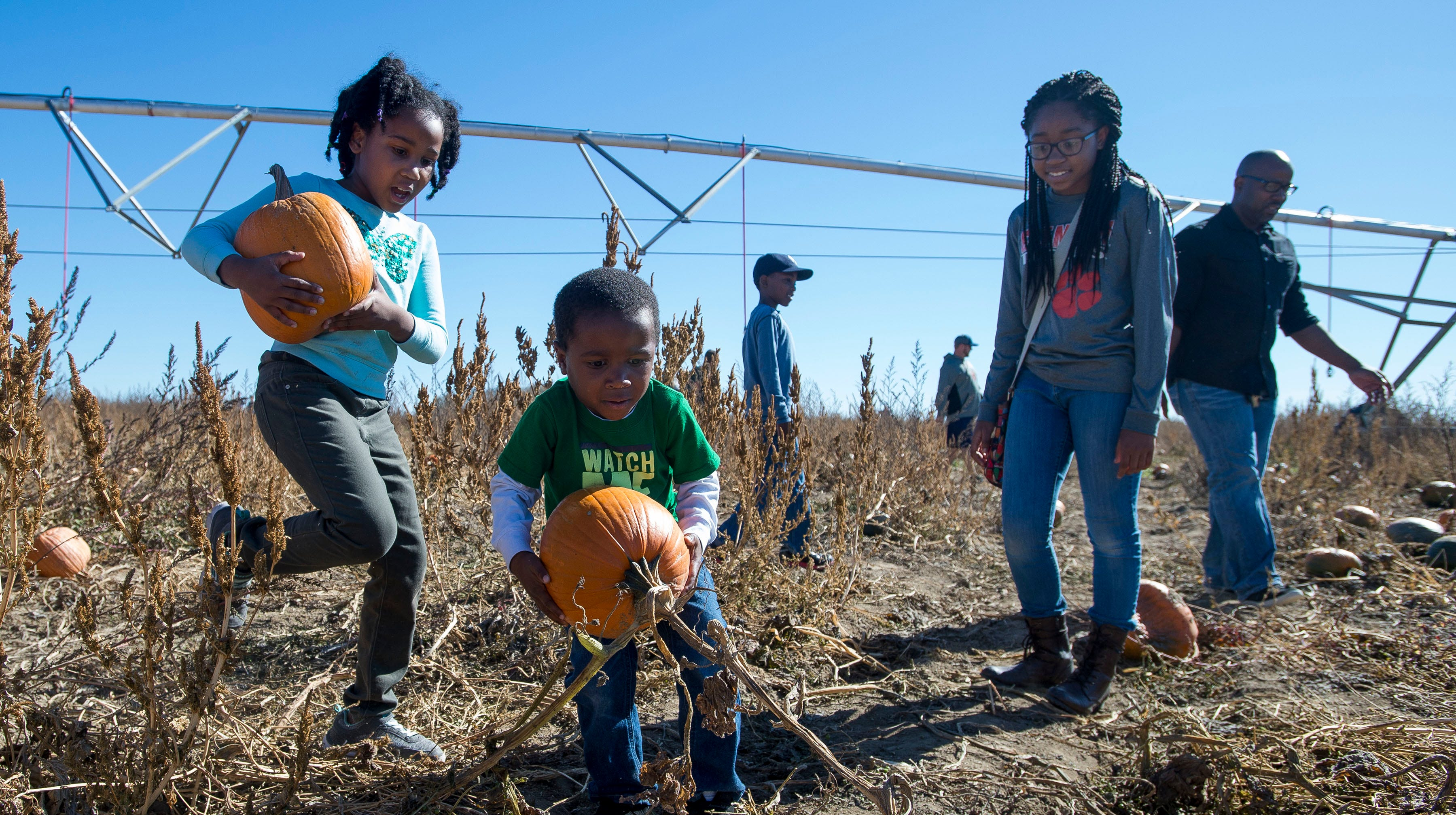 The hunt for the perfect pumpkin is on at Bartels Farm