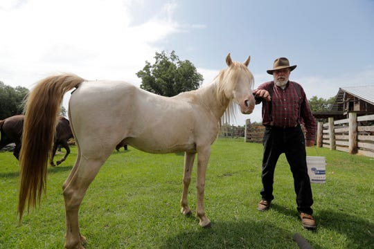 In this July 17, 2018, photo, Bill Frank Brown pets DeSoto, a 19-year-old Pine Tacky Stallion, on his farm in Poplarville, Miss. The farm had been in Brown's family since 1881 and the livestock there, even longer. Brown had three stallions back then, including DeSoto. He called them pine tacky horses. The Texas A&M veterinary school tested samples of the stallion' DNA, and they matched those of Rickman's Choctaws. (AP Photo/Gerald Herbert)