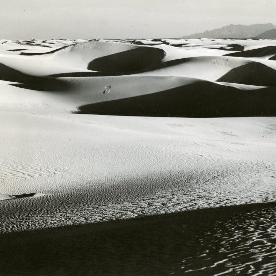 White Sands National Monument's ghost flies among dunes