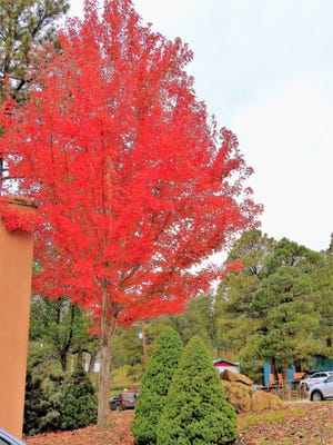 Vivid reds add accents to the village during the fall season.