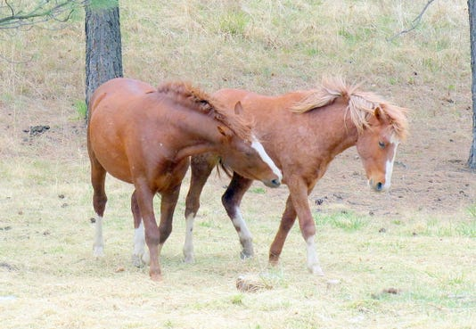 two free roaming horses in Ruidoso