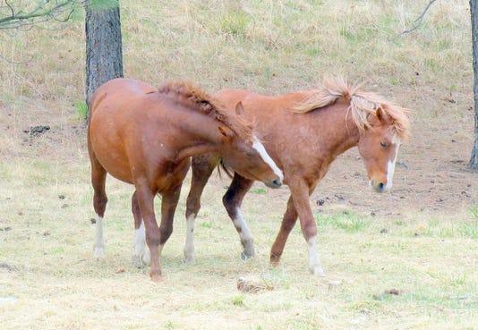 two free roaming horses in Ruidoso