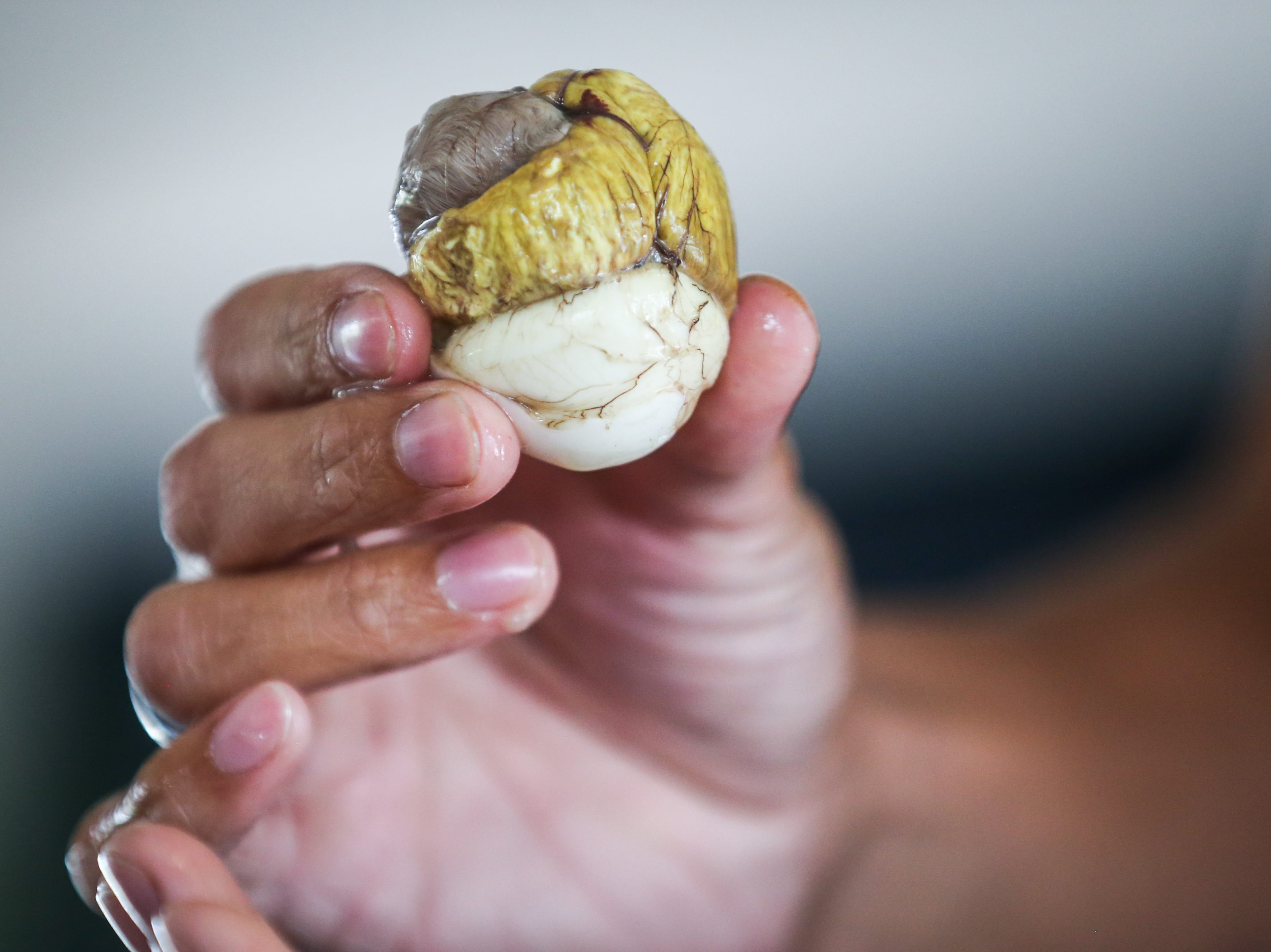 Maynard Zamora eats a balut during the Asian Bazaar Saturday, Oct. 20, 2018, at El Paseo de Santa Angela.