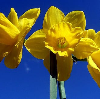 Plant wildflowers, bulbs now for a spectacular spring