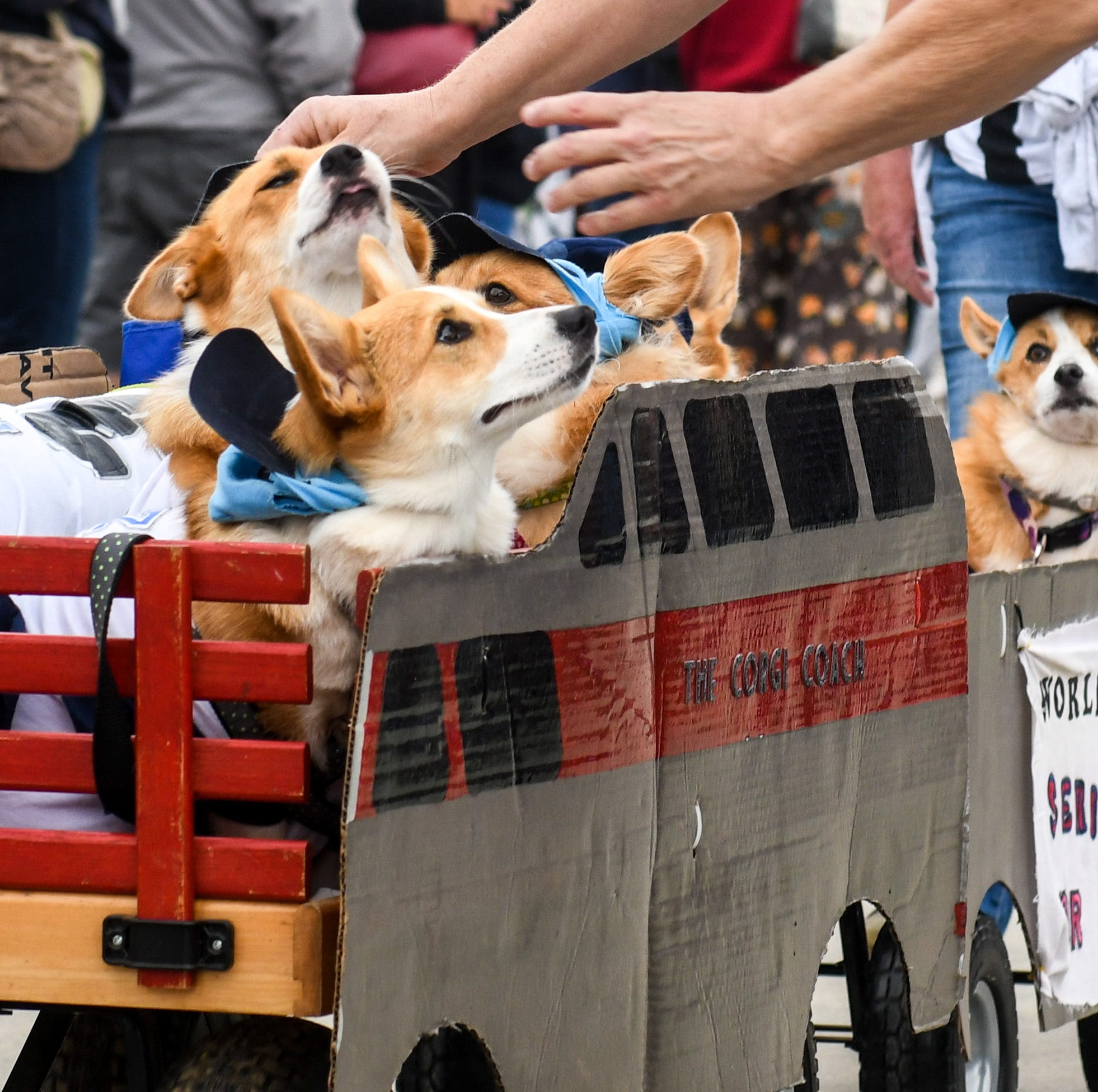 WATCH: Pet Parade fills Ocean City boardwalk with costumes, crowds